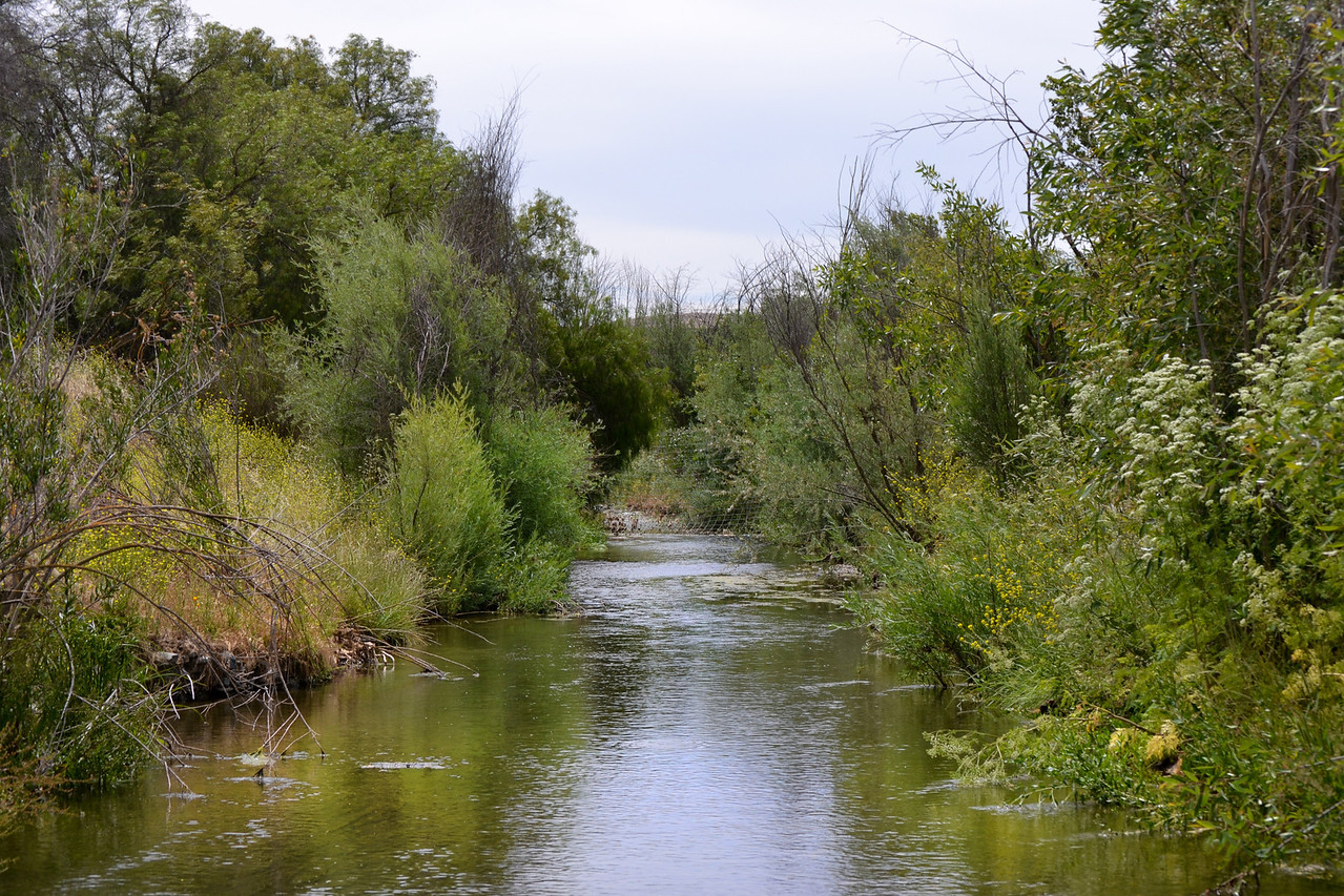 Arroyo Mocho Creek