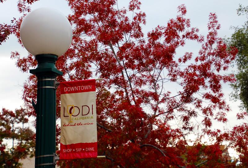 Lodi California, Lodi Sign with Fall Foliage