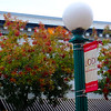 Lodi California, City Lamp with Fall Foliage