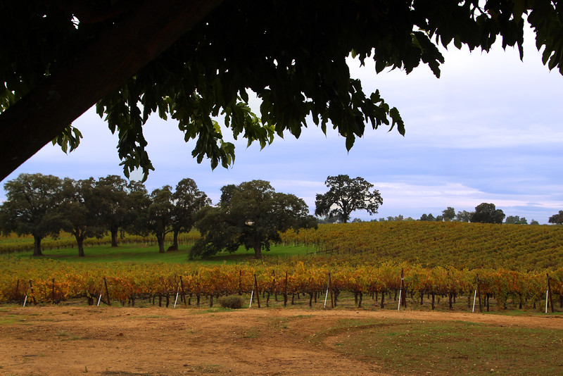 Lodi California, View on Bokisch Vineyards