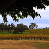 Lodi California, View on Bokisch Vineyards