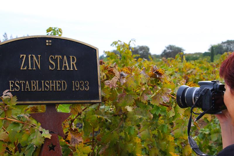 Lodi California, Lucas Winery, Old Zinfandel Vine