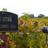 Lodi California, Lucas Winery, Old Zinfandel Vine