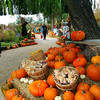 Lodi California, Michael David Winery Pumpkin Patch