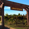 Lodi California, Demonstration Vineyard