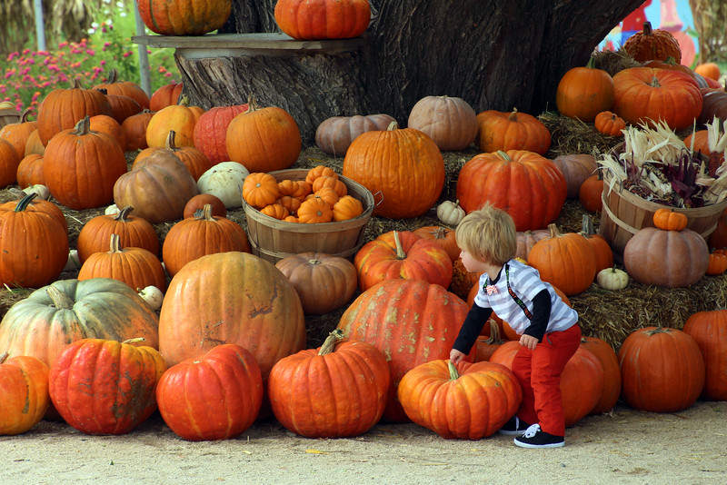 Lodi California, Michael David Winery, Pumpkin Patch