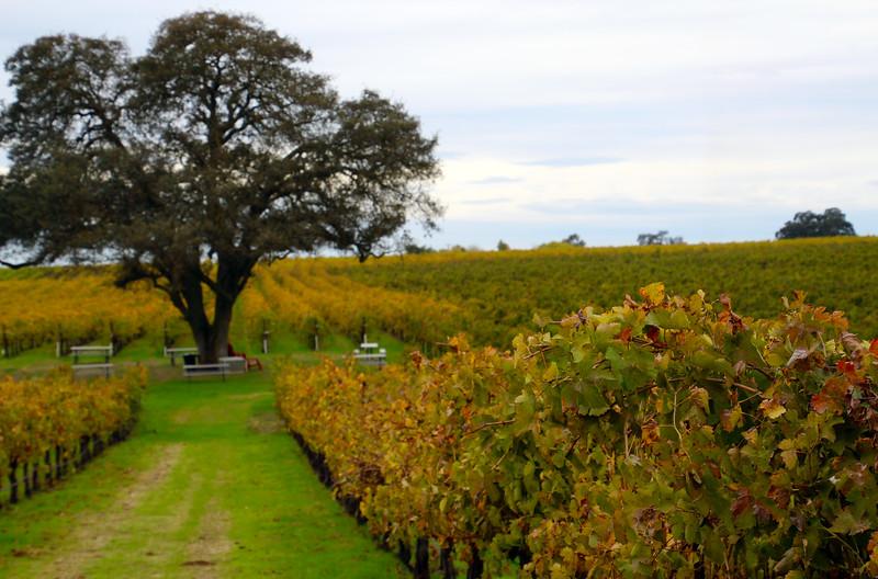 Lodi California, Bokisch Vineyards, Picnic Area