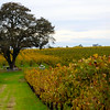 Lodi California, Bokisch Vineyards, Picnic Area