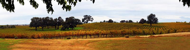 Lodi California, Bokisch Vineyard Panorama