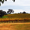 Lodi California, Bokisch Vineyard Panorama