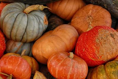 Autumn Squash #1