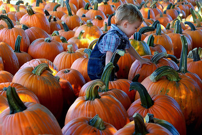 Chase and the Pumpkins