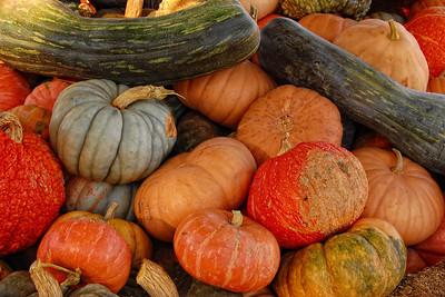 Autumn Squash #3
