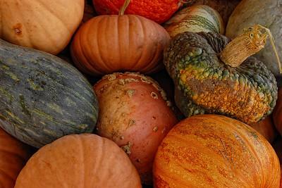 Autumn Squash #4
