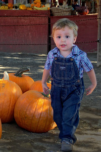 Little Boy and Pumpkins