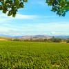 Lompoc California, View on Sta. Rita Hills