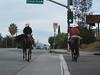 Whittier Horses