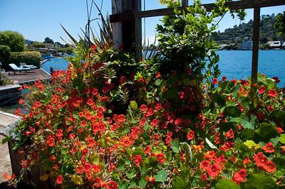 lagoon-flowers