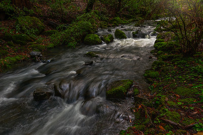Creek's Edge