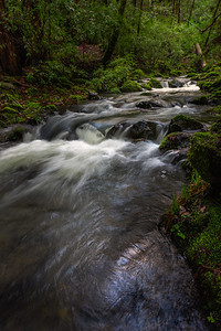 Montgomery Woods Creek