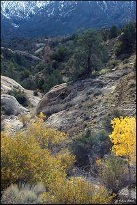 Canyon and Chamisa Pear Blossom CA