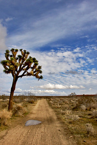 Winter Day in the Mojave