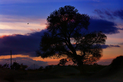 Old Tree at Sunset