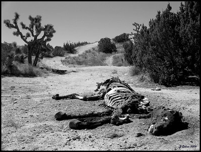 Life and Death in the Desert