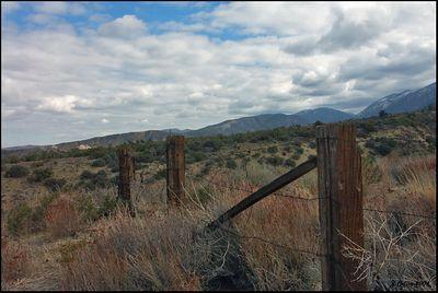 Desert Fence Pear Blossom CA