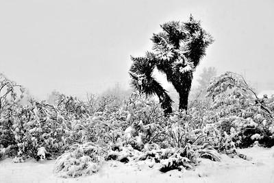 Mojave Snow Storm!