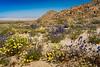 Desert wildflowers blooming along Route 66 in the Mojave Desert, California, USA.