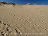 Kelso Dunes, Mojave Natl Preserve, CA (19)