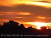 Mojave Natl Preserve, Mid-Hills area, CA (76)