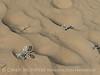 Kelso Dunes, Mojave Natl Preserve, CA (4)