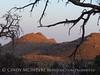 Mojave Natl Preserve, Mid-Hills area, CA (70)