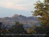 Mojave Natl Preserve, Mid-Hills area, CA (61)