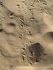 Kelso Dunes, Mojave Natl Preserve, CA (10)