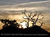 Mojave Natl Preserve, Mid-Hills area, CA (68)