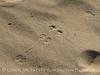 Kelso Dunes, Mojave Natl Preserve, CA (20)