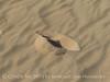 Kelso Dunes, Mojave Natl Preserve, CA (18)