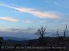 Mojave Natl Preserve, Mid-Hills area, CA (80)