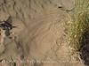 Kelso Dunes, Mojave Natl Preserve, CA (12)