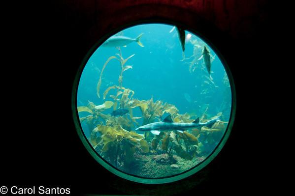 Monterey Bay Aquarium/Pacific Grove