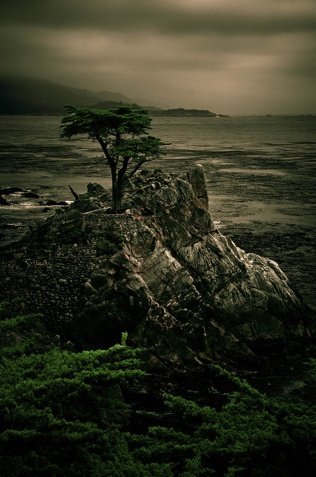 The Lone Cypress, Monterey, CA, USA
