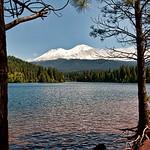 shasta-lake-trees-mountain