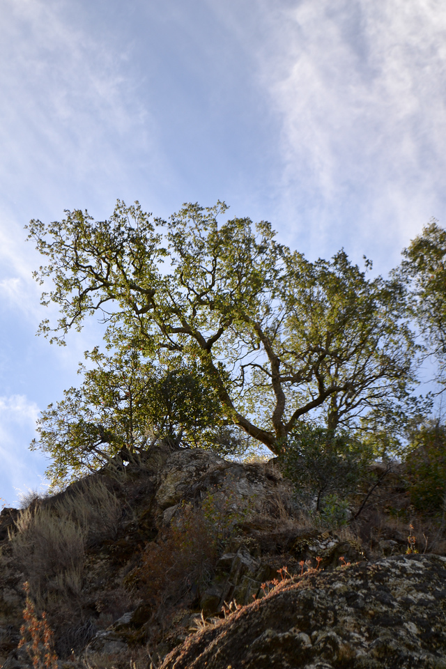 Looking up from the bottom of Little Yosemite on Alameda Creek, Sunol, CA.