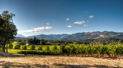 trinchero-vineyard