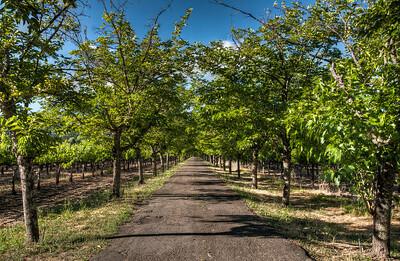 napa-valley-vineyard-2