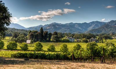 napa-valley-wine-vineyard