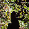 Armstrong Redwoods-0461